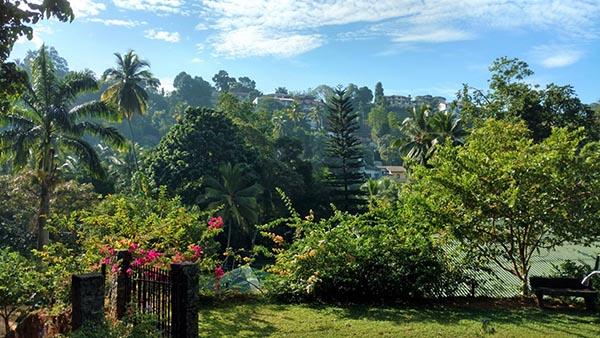 Clove Garden
