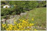 Occitanie - Mas Pinet. Photo prise au bord de la rivière, au premier plan des jeunets en fleur et au fond on aperçoit les yourtes