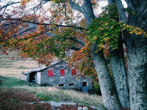 """Biological Agricultural farm """" Alpe di Puntato"""" - Photo prise en contre plonhée à côté d'un arbre qu'on voit au premier plan à droite. Au fond et en contre bas la batisse en pierre aux volets rouges"""