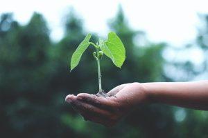 Plante dans la main d'une personne respectant l'environnement